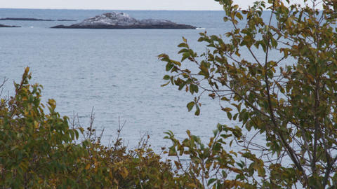 Rocky outcropping off the coast of Marblehead, Massachusetts Footage