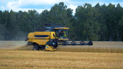 Combine harvester season harvesting wheat field Live Action