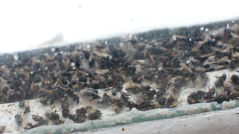 Lots of flies on window pane and buzz Footage