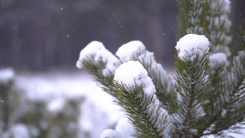 Fir tree in the snow Footage