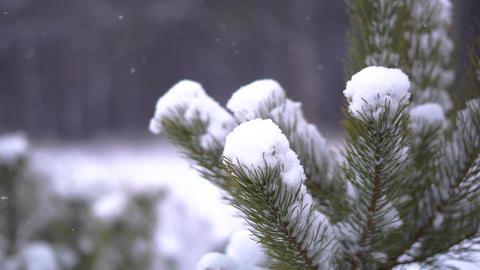 Fir tree in the snow ビデオ