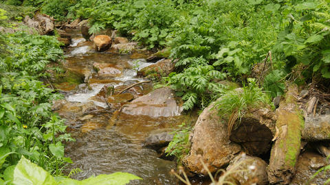 Flow down clean water through stones in forest water fall Footage