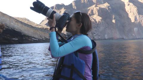 Ecotourism on Galapagos - tourist photographer taking photos galapagos wildlife Footage