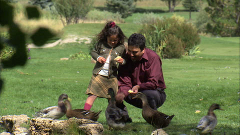 Father and daughter feeding ducks at the park Footage