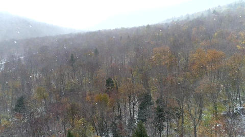 Aerial Drone - Fly Over Bare Forest in Driving Snow 4K Stock Video Footage