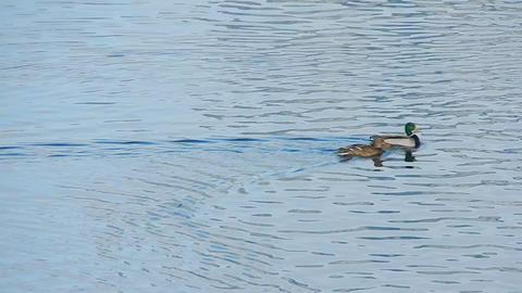 Ducks On Ice 0