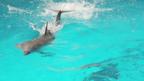 Trained Dolphin Swim Stock Video Footage