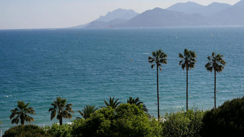 View of the city of Cannes, palm trees, yachts and azure sky GIF