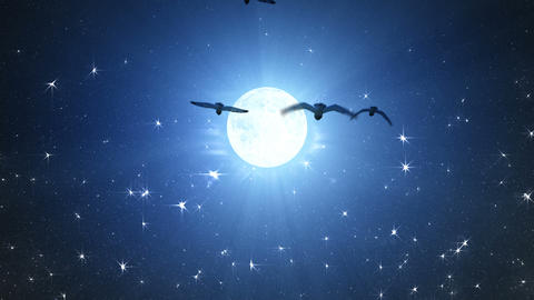 Flocks of night owls flying towards full Moon GIF