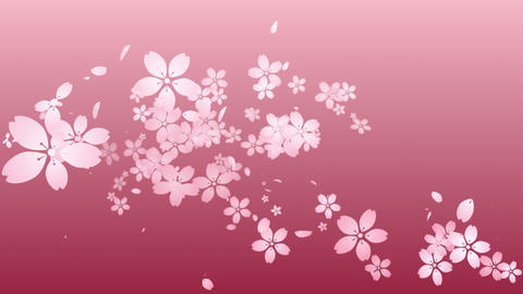 Cherry blossoms are blooming along the trajectory ,in pink background 3 애니메이션