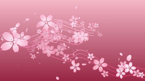 Cherry blossoms are blooming along the trajectory ,in pink background 2 Animation