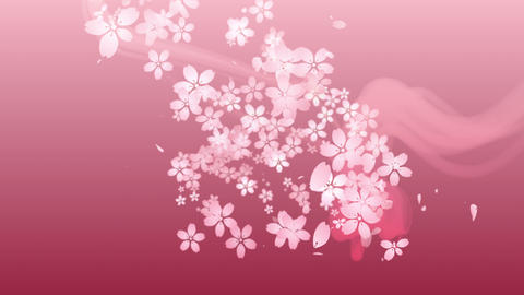 Cherry blossoms are blooming along the trajectory ,in pink background 1 CG動画