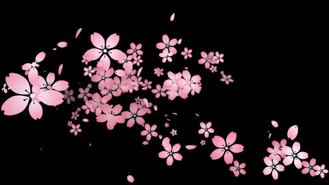 Cherry blossoms are blooming along the trajectory ,in black background Animation