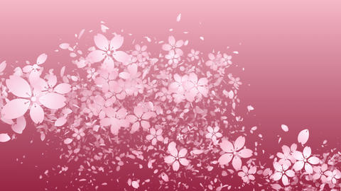 Cherry blossoms and flower petal are blooming along the trajectory ,in pink Animation