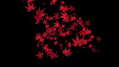 red momiji leaves are blooming along the trajectory , in black background Animation