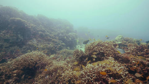 Tropical fish swimming over coral reef on seabed underwater view. Coral reef and Live Action