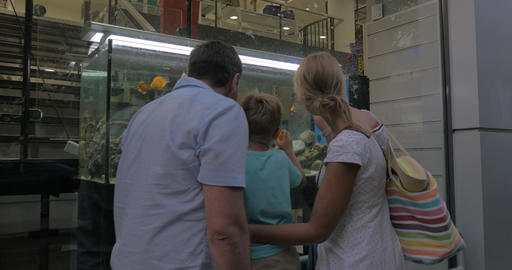 Family watching aquarium in shop show-window Footage