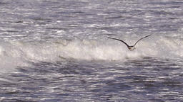 Seagull above messy waves Footage