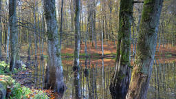 Autumn in a swampy forest Live Action