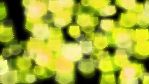 Cat-illuminations-yellow Stock Video Footage
