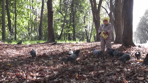 small boy and pigeons 03 Stock Video Footage