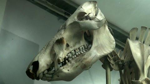 Skull Footage