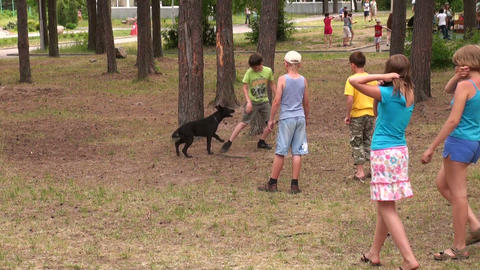 Children play with a dog Footage