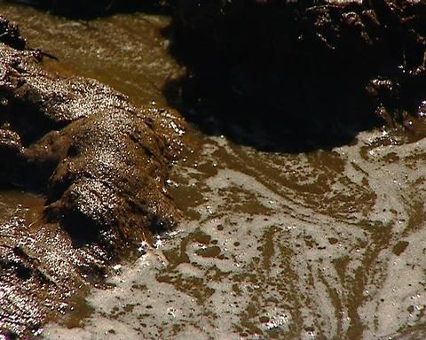 Marsh, muddy water Stock Video Footage