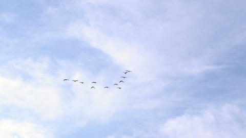 Bird flock flies across blue sky Footage