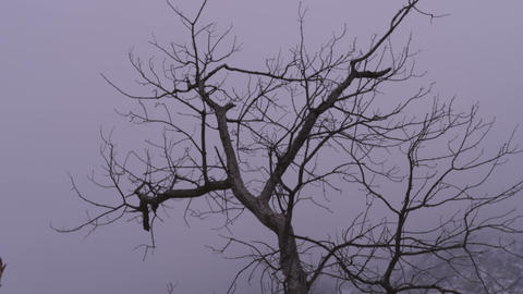 Low-angle footage of bare branches of a tree Footage