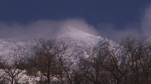 Clouds above the treeline of a winter forest Footage