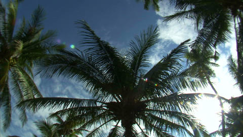 Looking up at palm trees and the blue sky Footage