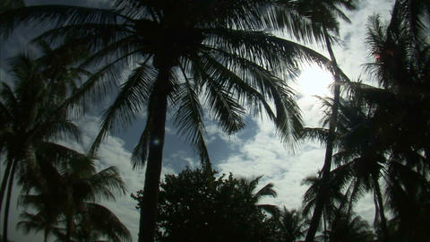 Nearly silhouetted palm trees against a blue sky Footage
