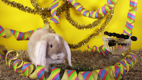 Animal party pet party cute lop rabbit celebrate celebrating new year birthday Footage