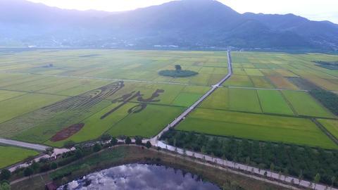 Aerial View of Akyang Rice Paddy Field, Hadong, Gyeongsangnamdo, South Korea, Live Action