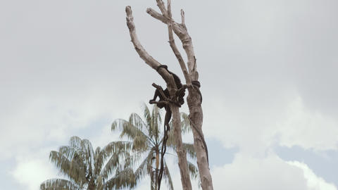 monkey on tree branch in tropical forest Live Action