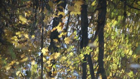 Autumn park blurred reflection ライブ動画