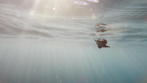 Incredibly rare footage of a baby sea turtle after entering the ocean Live Action