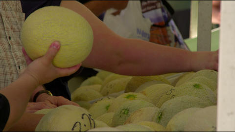 Row of people inspecting cantaloupes Footage