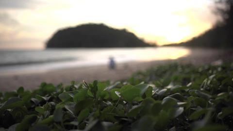 Beach morning glory on sunset beach Footage