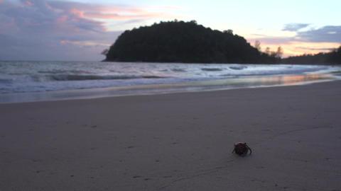 Hermit crab walk on the beach Footage