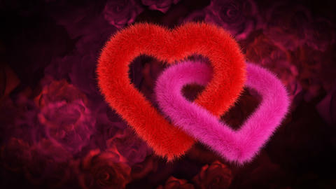 Union of two hearts, red and pink on red rose bg Animation