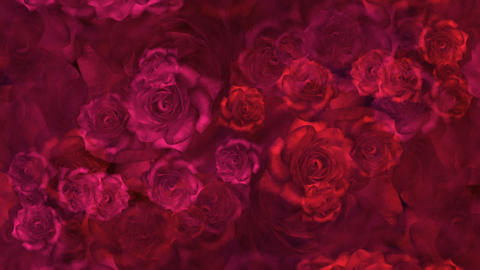 Red roses buds on a background for wedding video Animation