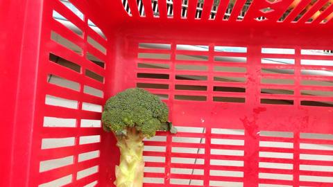 Unloading Loading Vegetables Shopping Bag ライブ動画