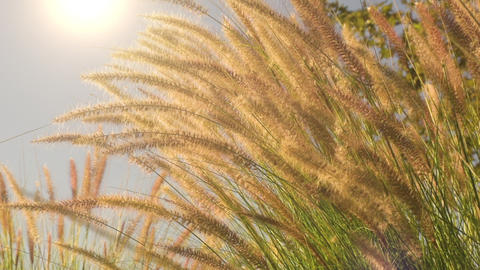 Grasses Blowing Slow Motion GIF
