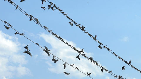Birds sit on wires and fly away ビデオ