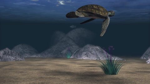 An aquatic scene with fish and a sea turtle Footage