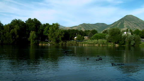 Static shot of ducks swimming in a pond in Utah Footage
