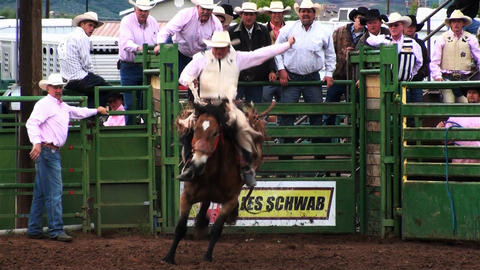 A rodeo cowboy springs from the gate on a bucking horse Footage