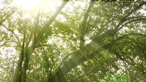 Tilting lens flare shot of trees in Utah Footage